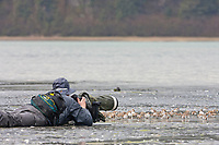 Photographer lays in the intertidal mud flats to photograph the Western sandpipers that flock to the shores of Hartney Bay, Copper River Delta, Prince William Sound, Alaska, to refuel during their migration to summer nesting grounds.
