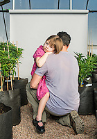 Charlotte Figi (cq, age 7) with her dad Matt Figi (cq) in the marijuana farm that grows Charlotte's Web in Colorado Springs, Colorado, Thursday, February 6, 2013. Charlotte suffered from over 100 seizure like symptoms and epilepsy before discovering a strain of marijuana that would stop her seizures. <br /> <br /> Photo by Matt Nager