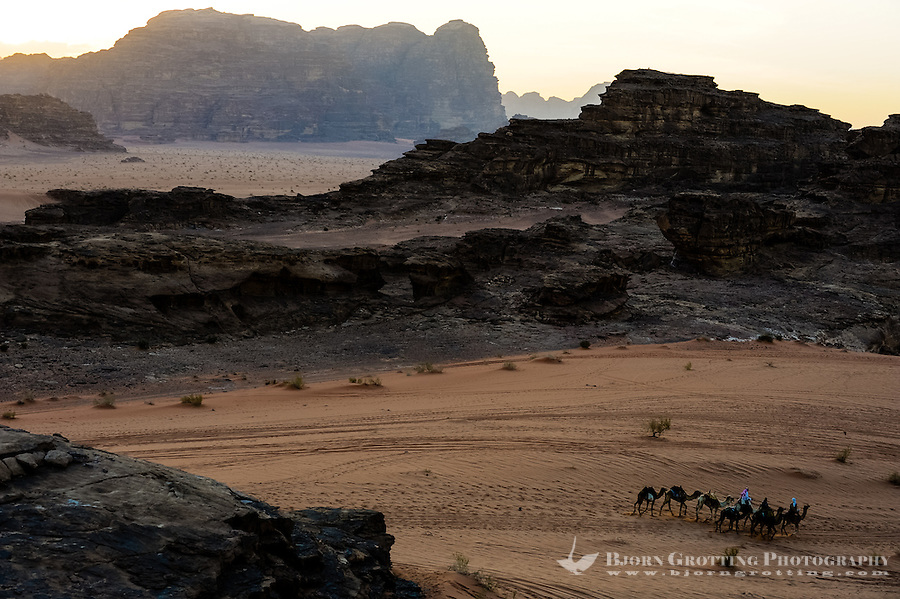 Jordan. Wadi Rum is also known as The Valley of the Moon. Small dromedary caravan heading for the bedouin camp.