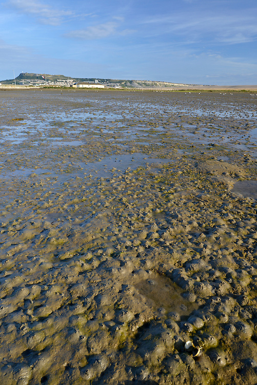 Low tide at Ferrybridge, Portland - Classic wader feeding ground