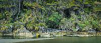 Lush green coastal native bush on bank of Smoothwater River near Jackson Bay, South Westland, West Coast, UNESCO World Heritage Area, New Zealand, NZ