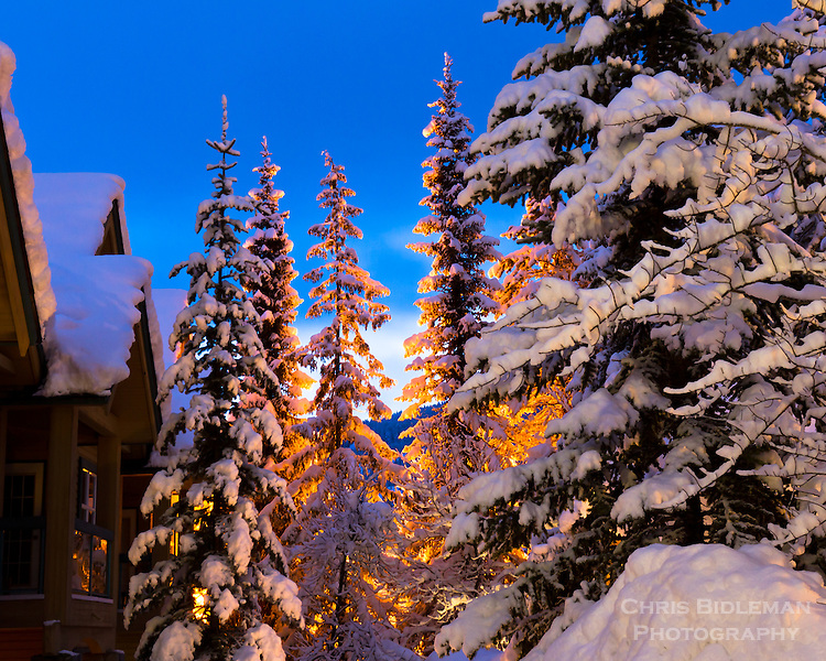 Snow covered evergreen trees in the Coastal Mountains (Fitzsimmons Range) of British Columbia are glowing from street lights next to ski chalet as the blue light of dawn provides great background
