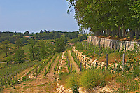 The unusual terraced vineyard Chateau de Pressac St Etienne de Lisse Saint Emilion Bordeaux Gironde Aquitaine France