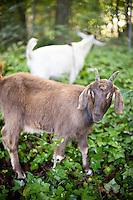 Alix Bowman and the Goat Patrol