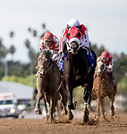 November 2, 2019 : Spun to Run, ridden by Irad Ortiz Jr., wins the Big Ass Fans Breeders' Cup Dirt Mile on Breeders' Cup Championship Saturday at Santa Anita Park in Arcadia, California on November 2, 2019. Alex Evers/Eclipse Sportswire/Breeders' Cup/CSM