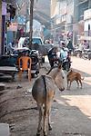 Donkey-Bazaar in Taj Ganj, Agra