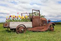 Old Rusty Vintage Truck in Palouse Washington