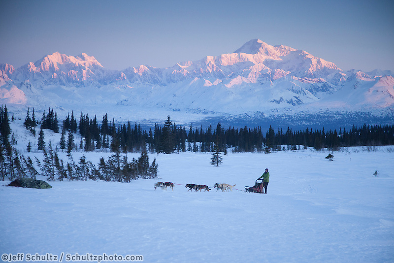 Recreational dog mushing in Denali State Park   Alaska Range and Mt. Mckinley background.  Spring<br />