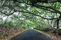 Small scenic road leading through a canopy of green foliage in Puna, Big Island.