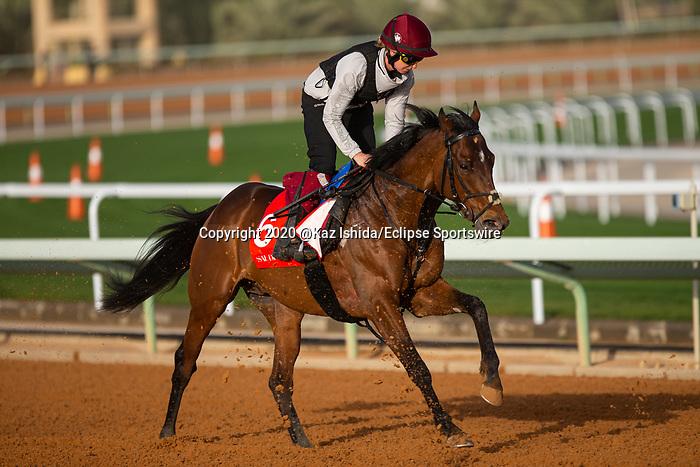 RIYADH,SAUDI ARABIA-FEB 27: Downdraft excercises for Longines Turf Handicap at King Abdulaziz Racetrack on February 28,2020 in Riyadh,Saudi Arabia. Kaz Ishida/Eclipse Sportswire/CSM
