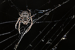 Spider in her web.