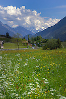 Alpine village in the spring with a foreground of flowers grasses and snow capped mountains in the background. Imst district, Tyrol, Austria.