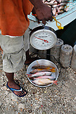 BELIZE. Belize City, fishermen sell fish at the Southside fishmarket
