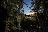 Cerro o  monta&ntilde;a en el rancho el Pe&ntilde;asco al atardecer. <br /> Rancho eco tur&iacute;stico El Pe&ntilde;asco en el pueblo Magdalena de Kino. Magdalena Sonora. <br /> &copy;Foto: LuisGutierrrez/NortePhoto