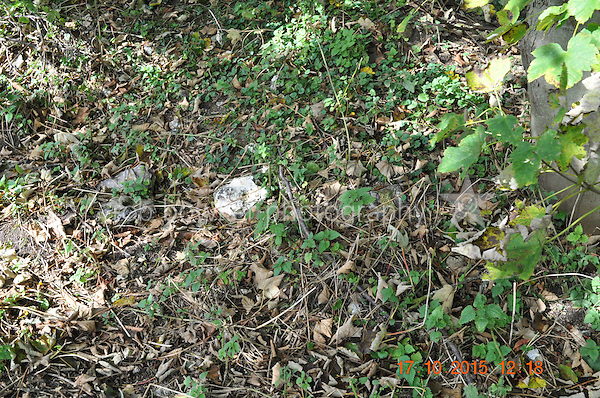 RIVERSIDE AMENITY LAND AT STREATLEY. TITLE NO: BK381630<br /> Evidence of building materials.