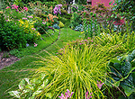 Vashon-Maury Island, WA: Summer perennial garden featuring Bowles golden sedge, persicaria 'Painters Palette', mayapple, roses; clematis and barberries.