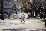 "Zoo keepers capture an escaped zebra at Ueno Zoo during an annual Escaped Animal Drill on February 2, 2016, Tokyo, Japan. Every year zoo keepers at one of Tokyo's zoos organise an escape drill to practice what they would need to do in the event of a natural disaster or other emergency. This year a member of the zoo staff wearing a zebra costume ""escaped"" and was subsequently captured and subdued by other zookeepers before it could get out onto the streets of Tokyo. In past years, gorillas and rhinos have also been involved in these events which are in themselves a tourist attraction. The zoo workers used giant nets, sticks and tranquilizer guns to make sure the zebra didn't get away."