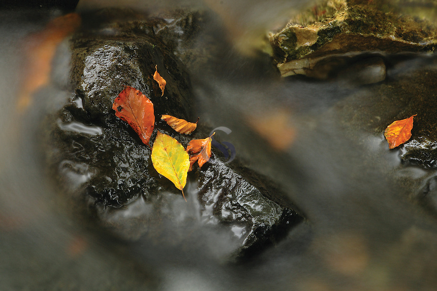 Leaves, rock and burn<br /> <br /> Copyright www.scottishhorizons.co.uk/Keith Fergus 2011 All Rights Reserved
