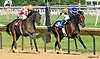 "Mister Nofty winning The Grover ""Buddy"" Delp Memorial Stakes at Delaware Park on 8/24/16"