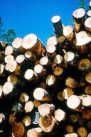 LOGGING.Logged White Pine Trees.Black Hills, SD.