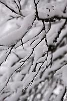 Europe/Finlande/Laponie/Kongäss: Forêt en hiver au Levi - Husky Park