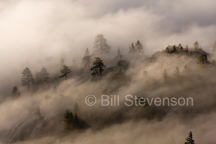 A photo of fog blowing through trees at sunrise on Donner Summit in California