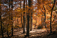 Italy, Alto Adige - Trentino (South Tyrol), Community Appiano sulla Strada del Vino: colourful autumn scenery at Castle Hiking Trail | Italien, Suedtirol, bei Bozen, Gemeinde Eppan: durch bunten Herbstwald auf dem Eppaner Burgenwanderweg