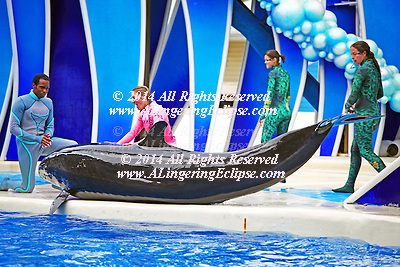Dawn Brancheau, a trainer and performer shown at the dolphin's tail n the far right at SeaWorld Orlando FL in 2009 at Shamu Stadium.  Dawn Brancheau was killed during a live show on February 24, 2010 by a killer whale Tilikum, at Shamu Stadium.