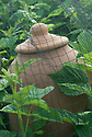 Traditional terrcotta rhubarb forcing jar seen through bird netting.