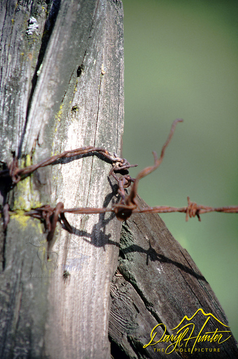 Barbed Wire, Old fence post