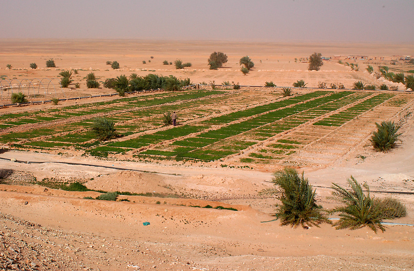 A vegetable garden is seen on December 11, 2003, in the Saharawi refugee camps. Saharawi people have been living at the refugee camps of the Algerian desert named Hamada, or desert of the deserts, for more than 30 years now. Saharawi people have suffered the consecuences of European colonialism and the war against occupation by Moroccan forces. Polisario and Moroccan Army are in conflict since 1975 when Hassan II, Moroccan King in 1975, sent more than 250.000 civilians and soldiers to colonize the Western Sahara when Spain left the country. Since 1991 they are in a peace process without any outcome so far. (Ander Gillenea / Bostok Photo)