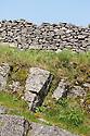 Limestone outcrop below a limestone dry stone wall. Peak District National Park, UK.