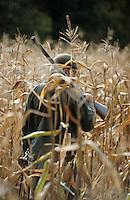 Europe/France/Centre/41/Loir-et-Cher/Sologne/Env Dhuizon: Chasse au gibier à plumes dans les maïs