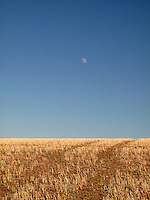 Tracks and moon in a wheat field in Montana.
