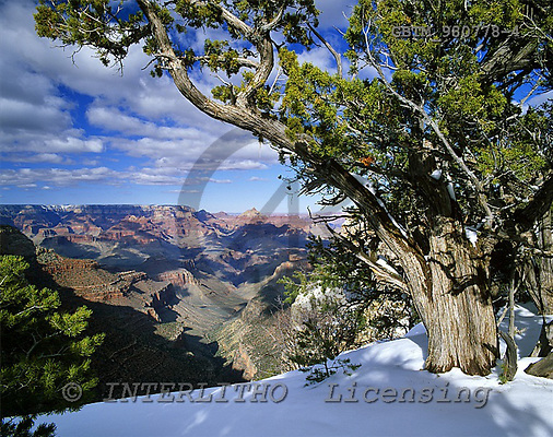 Tom Mackie, CHRISTMAS LANDSCAPE, photos, Grand Canyon in Winter, Arizona, USA, GBTM980778-4,#XL# Landschaften, Weihnachten, paisajes, Navidad