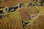 Colorful vineyards with autumn colors in California's Shenandoah Valley..Shenandoah Vineyards.Amador Foothill Winery