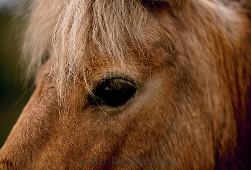 Portrait, the eye of a horse close up, Missouri USA