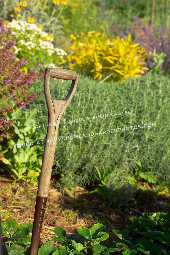 Detail of a wooden shovel tool handle inside an organic kitchen garden (a modern day Victory Garden) of mixed vegetables and colorful flowering herbs on Vashon Island in Washington State's Puget Sound. Garden design by Stenn Design