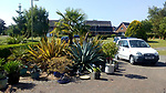 Pictured:  The agave plant in Julie Crook's front garden of her home in Andover, Hampshire on the 30th May 2020 as the stem continues to grow.<br /> <br /> An exotic 'tequila plant' has suddenly rocketed to 25ft in height after mysteriously sprouting in a couple's front garden after two decades lying dormant.  The giant agave's stalk unexpectedly began shooting up 12 weeks ago and now towers over owners Rob and Julie Crook's two-storey home in a little cul-de-sac.<br /> <br /> The grandparents-of-two have been left stunned by the plant's 'Jack and the Beanstalk' type growth after planting it in 2005.  Mrs Crook was gifted a six-inch pup - an offspring of the parent plant - by a friend 20 years ago after her fascination with the asparagus-like shrub.<br /> <br /> But the 59-year-old said she never expected the agave to grow to such heights at the front of the couple's home in the small Hampshire village of Charlton.  SEE OUR COPY FOR DETAILS.<br /> <br /> © Solent News & Photo Agency<br /> UK +44 (0) 2380 458800