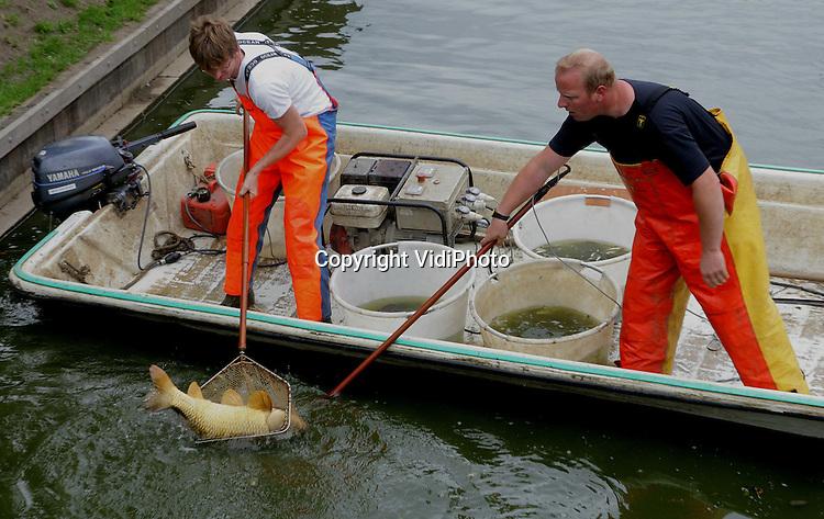 Foto: VidiPhoto..HUMMELO - Personeel van Aqua Terra Water en Bodem uit Geldermalsen, vist  met een electrisch schepnet alle vissen uit het riviertje de Weppel, in Hummelo. Ondanks een ingrijpende sanering door Waterschap Rijn en IJssel blijft het water troebel, mogelijk veroorzaakt door grote brasems en karpers die op de bodem hun voedsel zoeken. De vissen worden gewogen en opgemeten om zo een indruk te krijgen van de kwaliteit van de Nederlandse zoetwater vissen en daarna ergens anders weer uitgezet. Foto: Een enorme karper wordt gevangen.