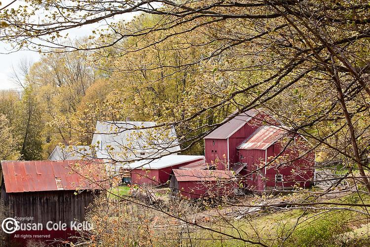 Elm Grove Farm in Pomfret, VT, USA