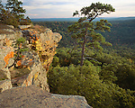 Petit Jean State Park, AR:  Late light on lichen covered sandstone cliff of Red Bluff above the forest of Cedar Creek Canyon