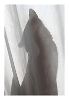 Cat & Curtain
