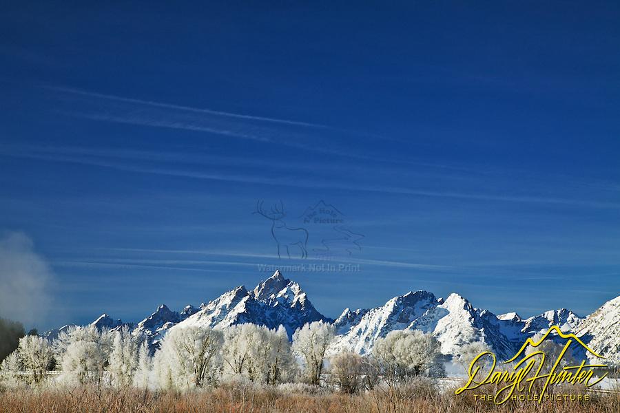 Winter, frosty cottonwoods, Grand Teton National Park