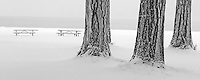 Tables and ponderosa pine tree with snow in Wallowa State Park,Oregon