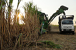 Afrika ANGOLA Malange , Biocom Projekt, Joint venture zwischen Konzern Odebrecht aus Brasilien und Sonangol, staatliche Oelgesellschaft Angolas, und weiteren Investoren u.a. Tocher des Praesidenten Dos Santos, auf einigen tausend Hektar wird Zuckerrohr fuer Produktion von Zucker und Bioethanol angebaut, die Zuckerfabrik ist im Bau und soll 240.000 Tonnen Zucker pro Jahr herstellen, dazu kommen 30 Millionen Liter Ethanol und 70 Megwatt Strom aus Bagasse von einem Biomassekraftwerk, Plantage und Zuckerfabrik sollen 1470 Menschen beschaeftigen, John Deere Erntemaschine bei Ernte von Zuckerrohr / ANGOLA Malange , Biocom Project, sugar factory and large farm for production of sugar cane for 240.000 tons sugar and 30billion litre bio ethanol, John Deere tractor combine harvester at sugar cane harvest