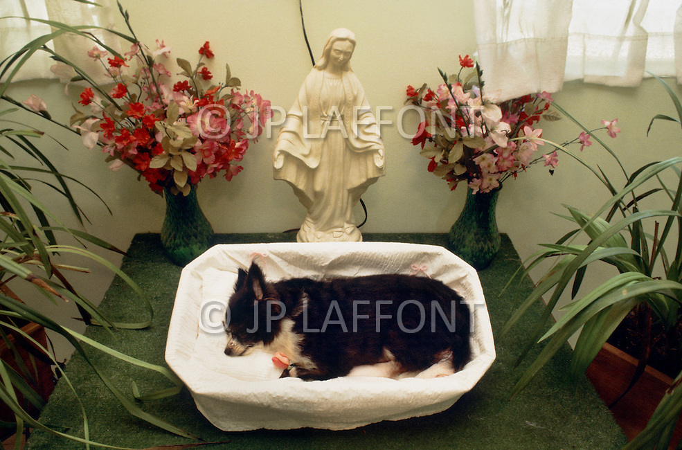 September 1984, September 1984, Gardena, CA. Pet Haven Cemetery of Gardena, CA, where more than 25.000 family pets lie buried, is the most famous animal cemetery in LA. Founded in 1948, this cemetery enables bereaved familys to mourn the death of their pets and to give them the burial they deserve. No expenses spared even $485 is spent on a dog service including flowers and grave stones marble and satin lined coffins. Several types of coffins and service arrangements are offered for a wide variety of pets, from birds to large dogs, for the family members to choose from.