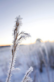 USA, Utah, Bryce Canyon City, Hwy 89, detail of grass covered in frost, near Bryce National Park
