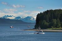 Commercial fishing boats near Hoonah, Alaska in the bay of Chichagof island, distant hills exhibit clearcut logging in the Tongass National Forest.