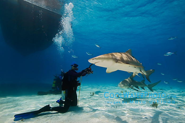 Lemon Sharks, Negaprion brevirostris, and woman scuba diver, West End, Grand Bahama, Atlantic Ocean.